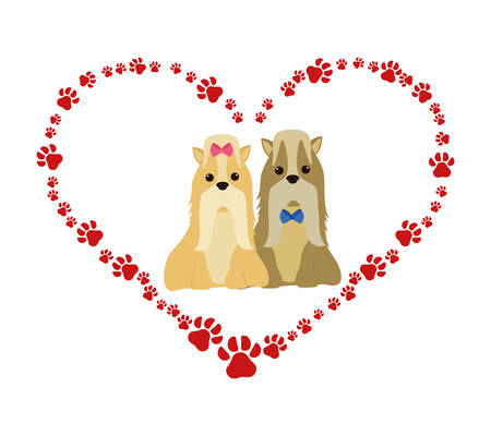 cute miniature chitzus in heart paws vector illustration design