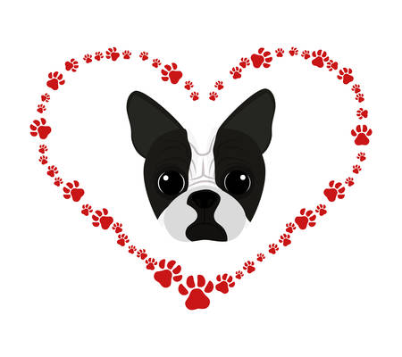 cute boston terrier in heart with pawprints vector illustration design