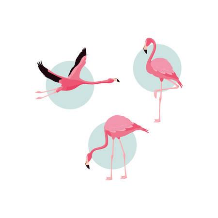 beautiful flamingos birds flock vector illustration design