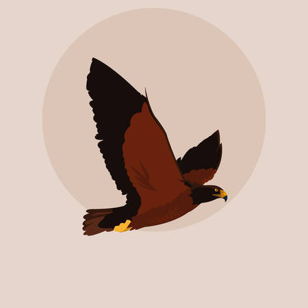 imposing hawk bird flying vector illustration design  イラスト・ベクター素材