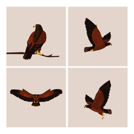 imposing hawks birds with different poses vector illustration design