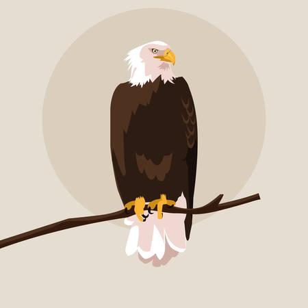 bald eagle bird in the branch vector illustration design