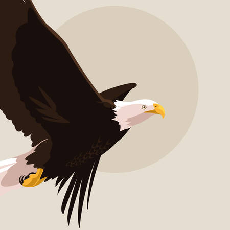 bald eagle bird flying vector illustration design