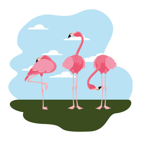 flamingos bird standing in the landscape vector illustration Ilustrace