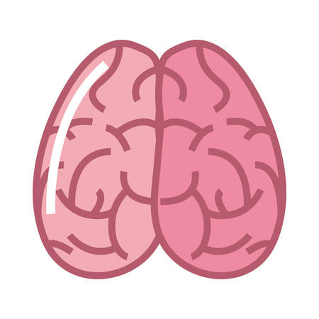 human brain organ on white background vector illustration Illustration