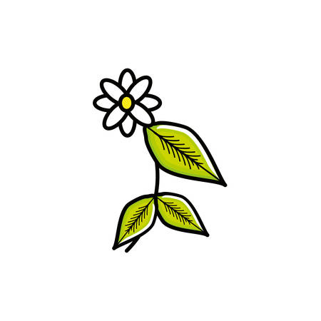 flower chamomile tea nature isolated icon vector illustration design Vectores