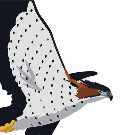 beautiful hawk flying majestic bird vector illustration design