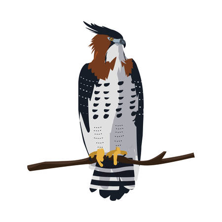 beautiful hawk in tree branch majestic bird vector illustration design Stock Illustratie