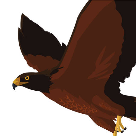 beautiful eagle flying majestic bird vector illustration design Stock Illustratie