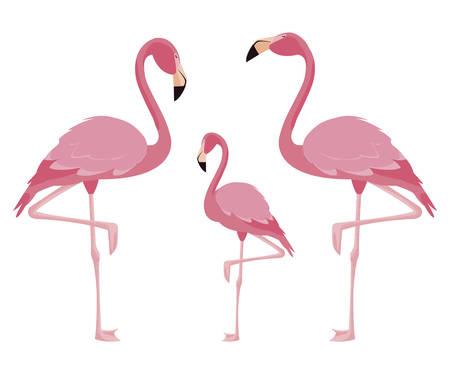 elegant flamingo birds family vector illustration design