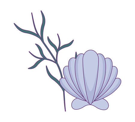 sea shell with seaweed isolated icon vector illustration design