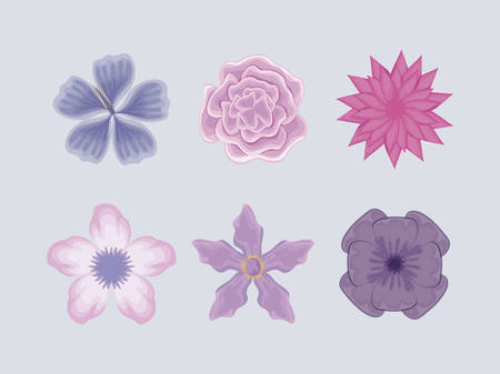 set of beautiful flowers vector illustration design Stock Vector - 121636471