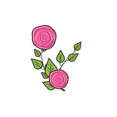 beautiful roses naturals with leafs vector illustration design Illustration