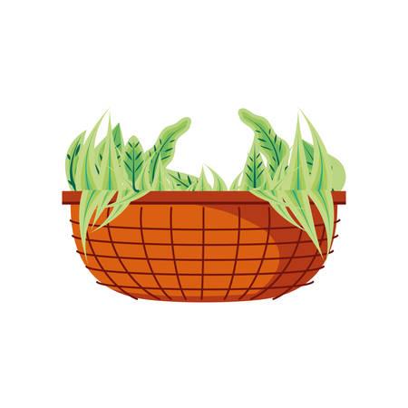 natural leafs in pot plant vector illustration design