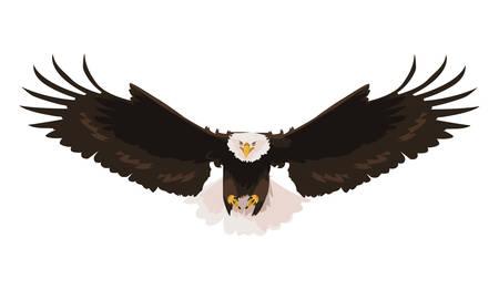Hermoso águila calva volando, diseño de ilustraciones vectoriales