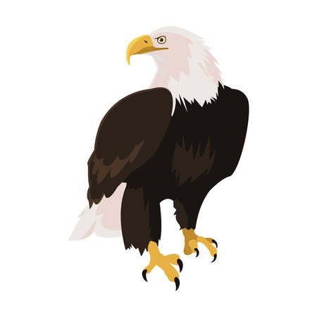 beautiful bald eagle animal vector illustration design Illustration