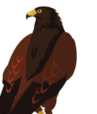 beautiful eagle majestic bird vector illustration design