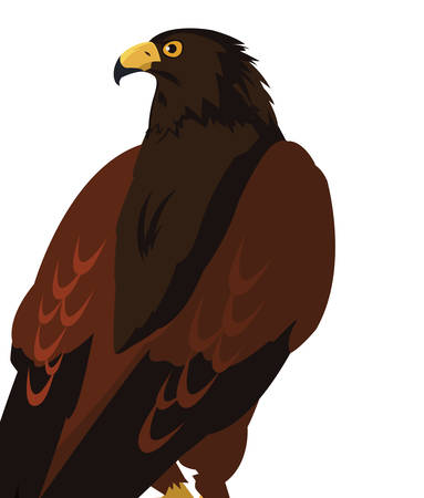 beautiful eagle majestic bird vector illustration design