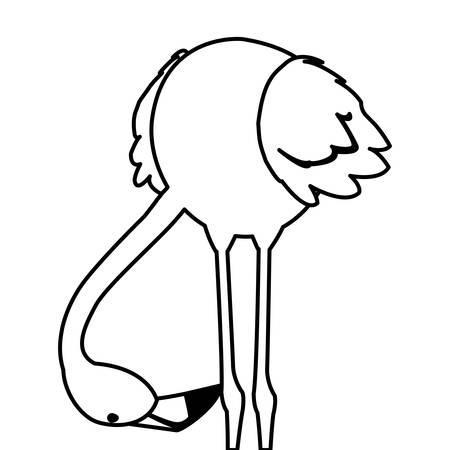 exotic flemish bird with head down vector illustration design