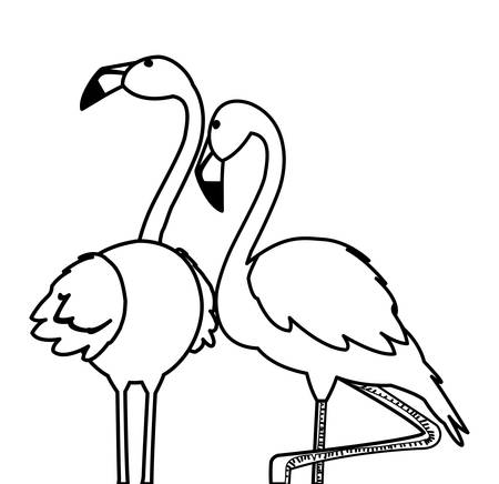 exotic flemish couple birds with romantic pose vector illustration design