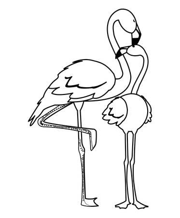 exotic flemish couple birds with heads up vector illustration design Векторная Иллюстрация
