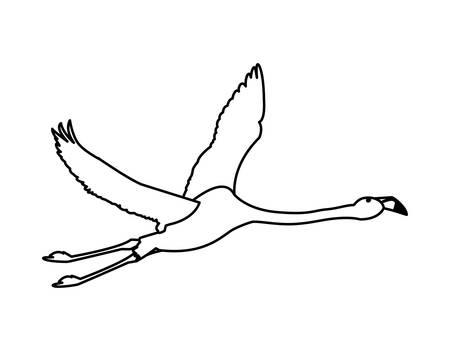 exotic flemish bird flying vector illustration design Ilustração