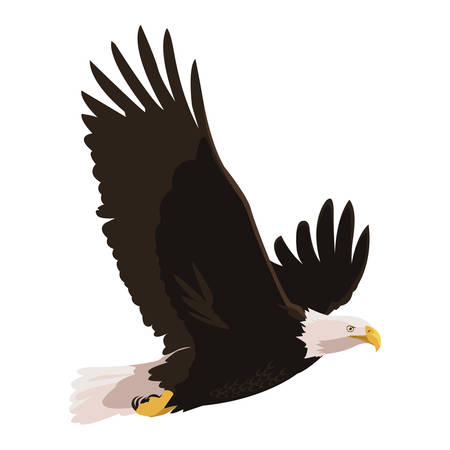 beautiful bald eagle flying vector illustration design