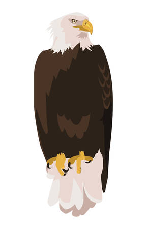 beautiful bald eagle animal vector illustration design 일러스트