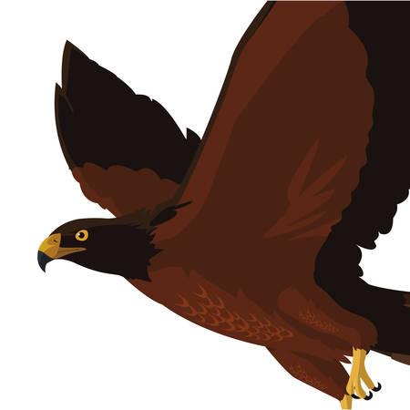 beautiful eagle flying majestic bird vector illustration design Ilustração