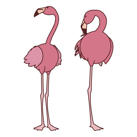 exotic pink flemish couple birds with heads up vector illustration design