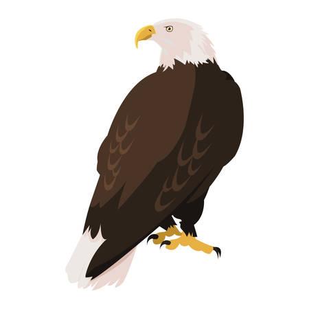 beautiful bald eagle animal vector illustration design