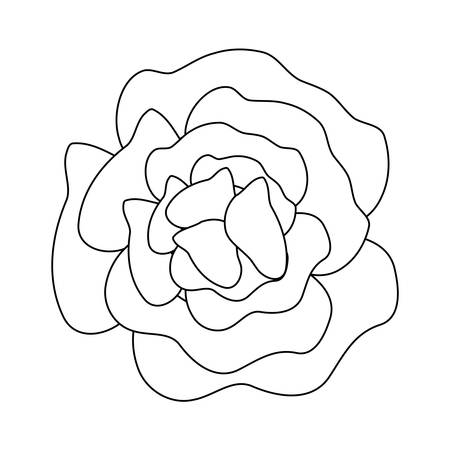 beauty flower isolated icon vector illustration design