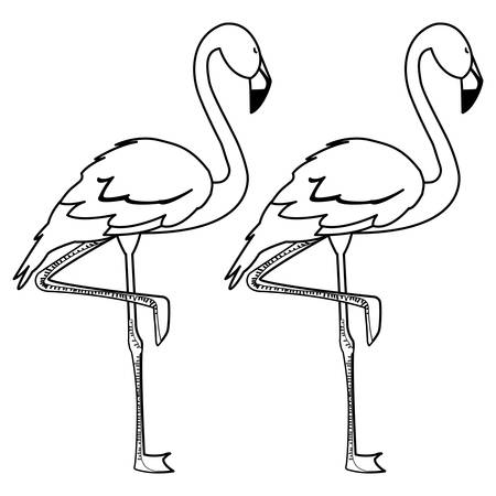 exotic flemish couple birds with heads up vector illustration design Ilustração