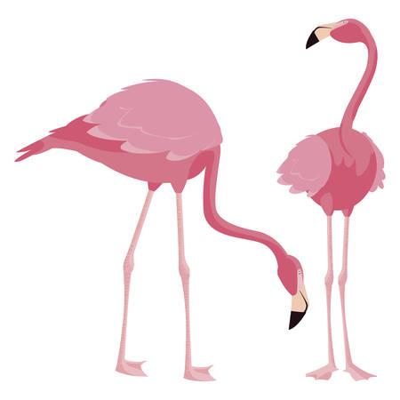 elegant flamingo birds couple vector illustration design