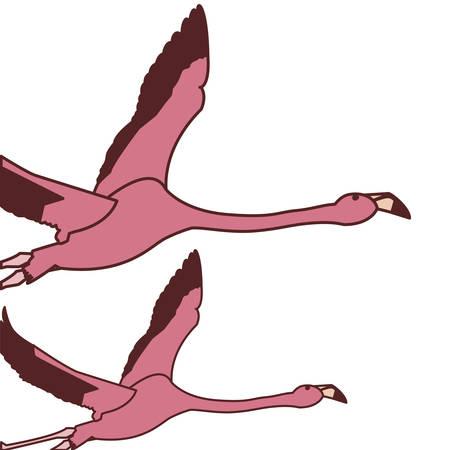 exotic pink flemish couple birds flying vector illustration design