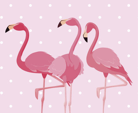 flock of elegant flamingos birds dotted background vector illustration design