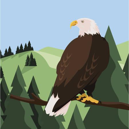 beautiful bald eagle in tree branch landscape scene vector illustration design Illustration