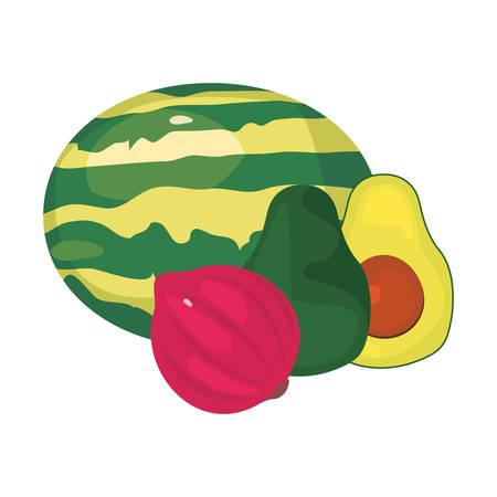 avocado red onion watermelon fresh food vector illustration