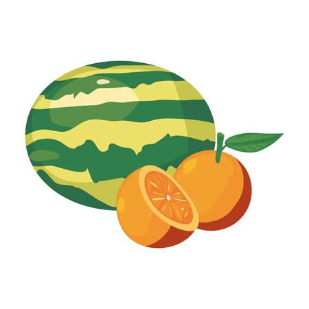 orange watermelon fresh food vector illustration design