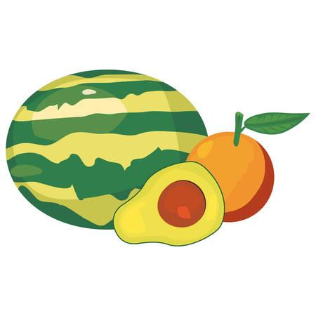 avocado orange watermelon fresh food vector illustration