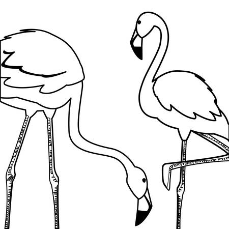 exotic flemish couple birds with different poses vector illustration design Фото со стока - 129418087