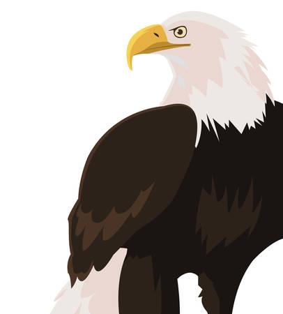 beautiful bald eagle animal vector illustration design Illustration