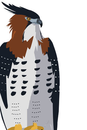 beautiful hawk majestic bird vector illustration design