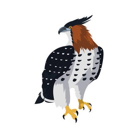 beautiful hawk majestic bird vector illustration design