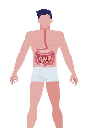 man anatomy with digestive system vector illustration design  イラスト・ベクター素材