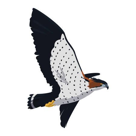 beautiful hawk flying majestic bird vector illustration design