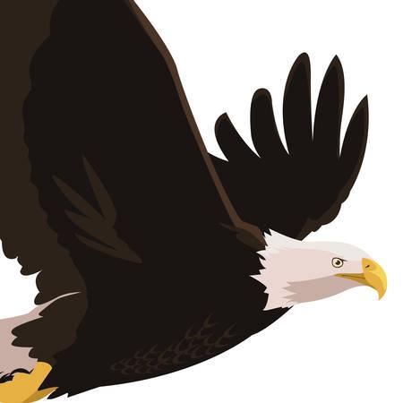 beautiful bald eagle flying vector illustration design