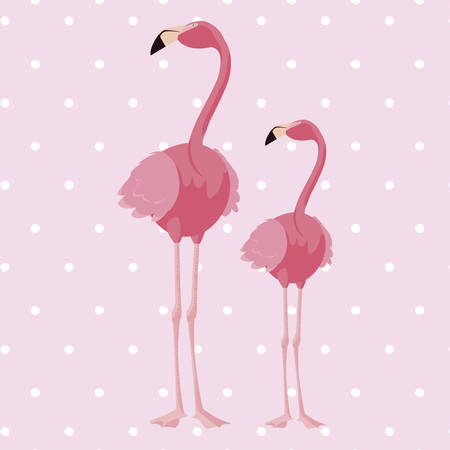 elegant flamingo birds couple dotted background vector illustration design
