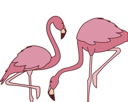 exotic pink flemish couple birds with different poses vector illustration design Illusztráció