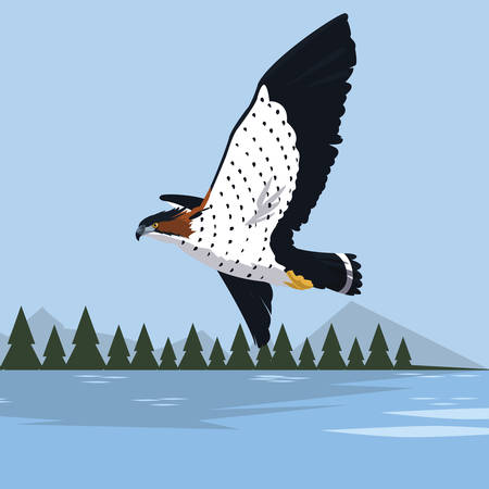 beautiful hawk flying majestic bird in the landscape vector illustration design